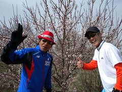 Cherry Blossom ? / 2010:03:11 09:44:50 Photo