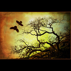 a couple of crows . . . (dragonflydreams88) Tags: theworldwelivein artistictreasurechest magicunicornverybest