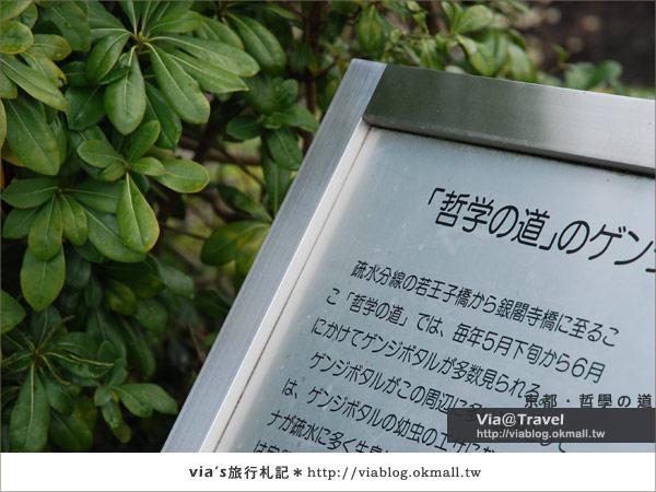 【via關西賞櫻行】京都賞櫻景點~哲學之道2