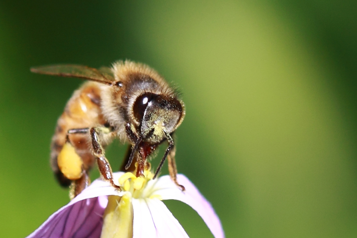 032010_Bee