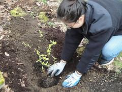 Joyce Plants Dogwoods
