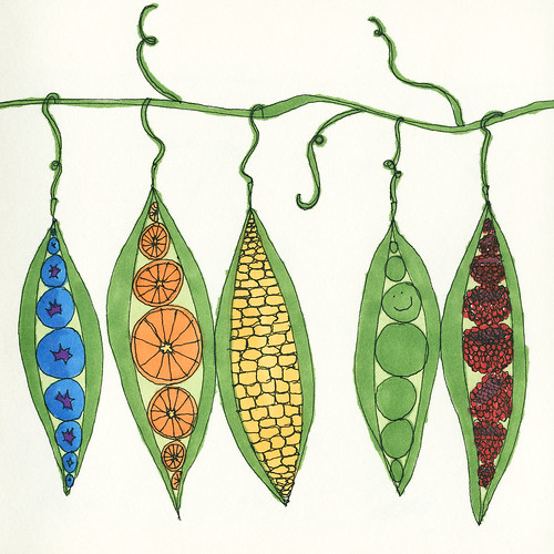 Orange Fruit Drawing. Fruit in Pods