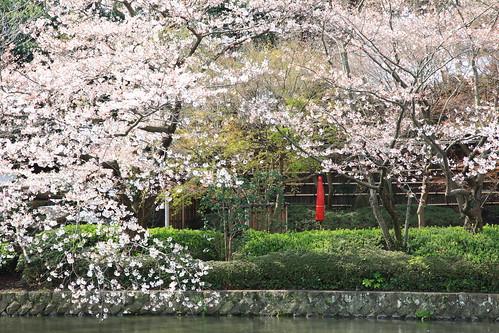 鶴岡八幡宮 Mar.28,2010
