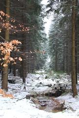 Kamieczyk - Karkonoski NP, Sudety, Poland (LeszekZadlo) Tags: wood trees winter snow mountains forest nationalpark stream poland polska unesco biospherereserve polen geology np gry polonia sudety karkonosze mab pologne silesia       dolnylsk    karkonoskipn reyervadelabiosfera