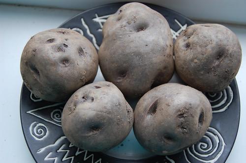 Shetland Black potato