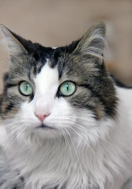 Eric's cat, Minet