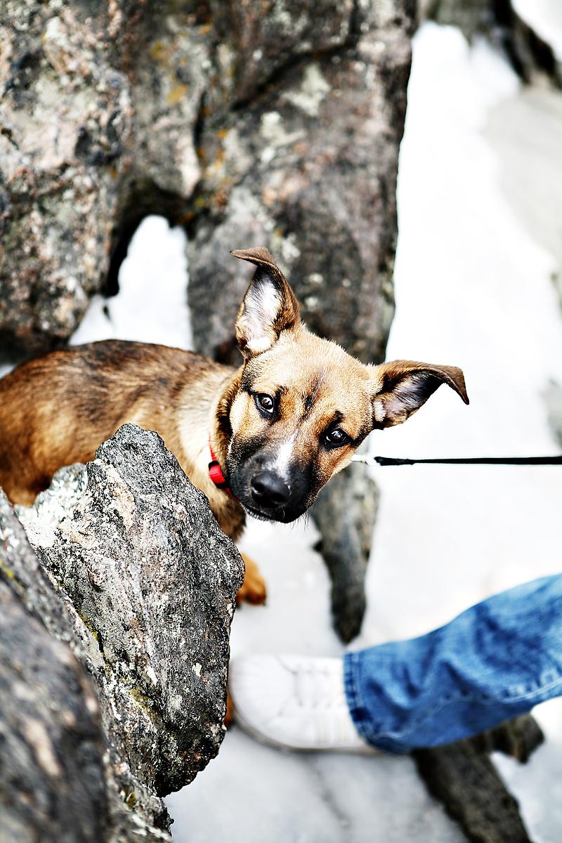 misa puppy