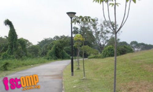 Sick and dying trees at Jurong Park Connector must be saved