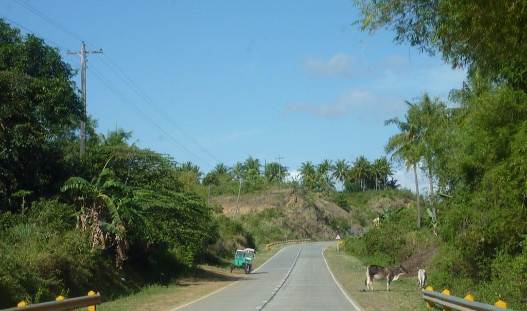 Bohol-Talibon-Chocolate Hills (103)