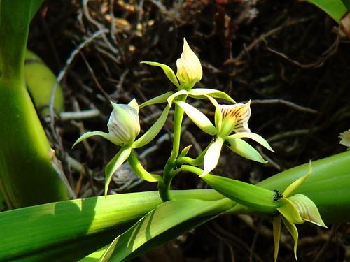 Orquídeas (10)