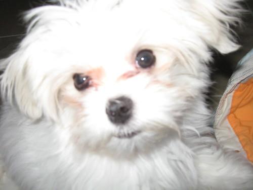 What a cutie Casper is!!