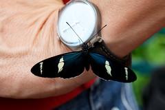 baudchon-baluchon-mindo-papillons-9