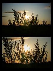 094 (AnkhaiStenn) Tags: park wood sunset sky cloud sun tree green field grass sunshine statue set sunrise ancient russia ukraine rise russian ukrainian steppe ussr rus boyan slav novgorodseversky slavian pushkari
