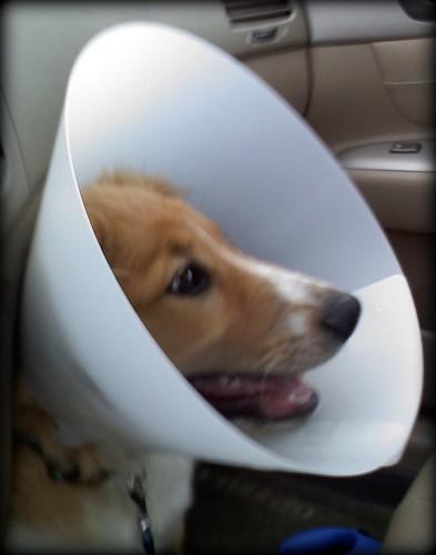 Reggie cone 3