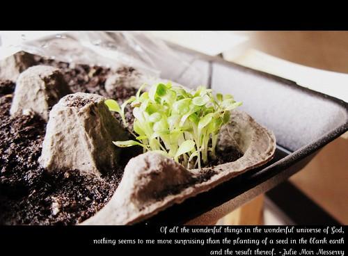 seeds_042310