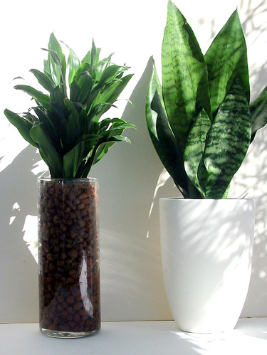 Hydroculture Houseplants