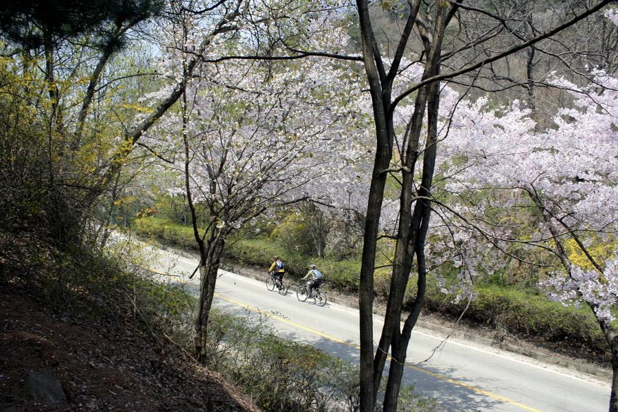 Road(1)