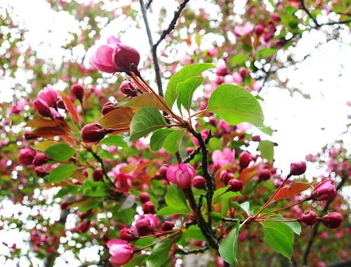 flowertrees 013