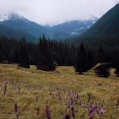 Tatry (bolas) Tags: mountains 6x6 tlr rollei poland polska slide va gry dolina tatry schneider zakopane kreuznach xenar rolleicord highlanders chochoowska cr200