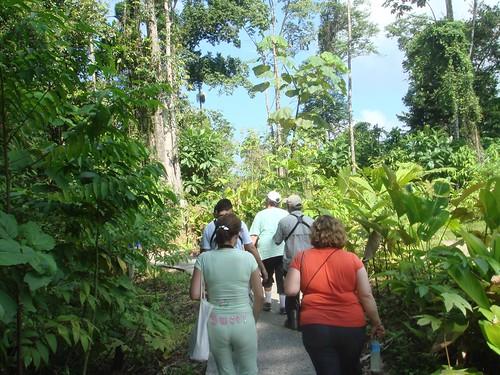 7 Festival Matemática, Veragua Rainforest