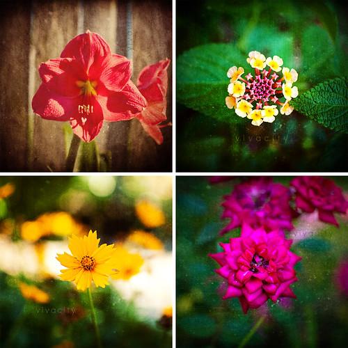 flower quad