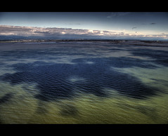 Dappled Ocean