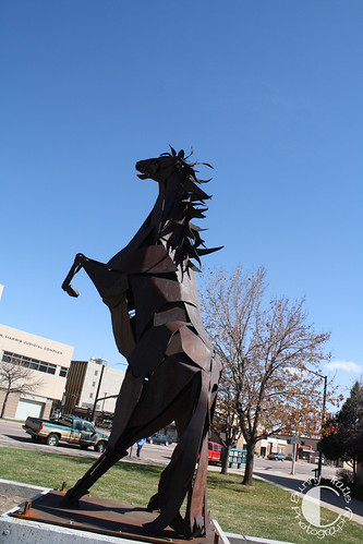 sharp horse-2