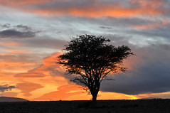 couch de soleil 4 (c.ledur) Tags: soleil solitude desert sable ciel maroc mineral arbre roche aventure cledur passiondclic