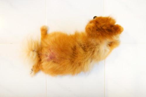 Buddy = dog loaf