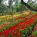 Tulpių ežeras