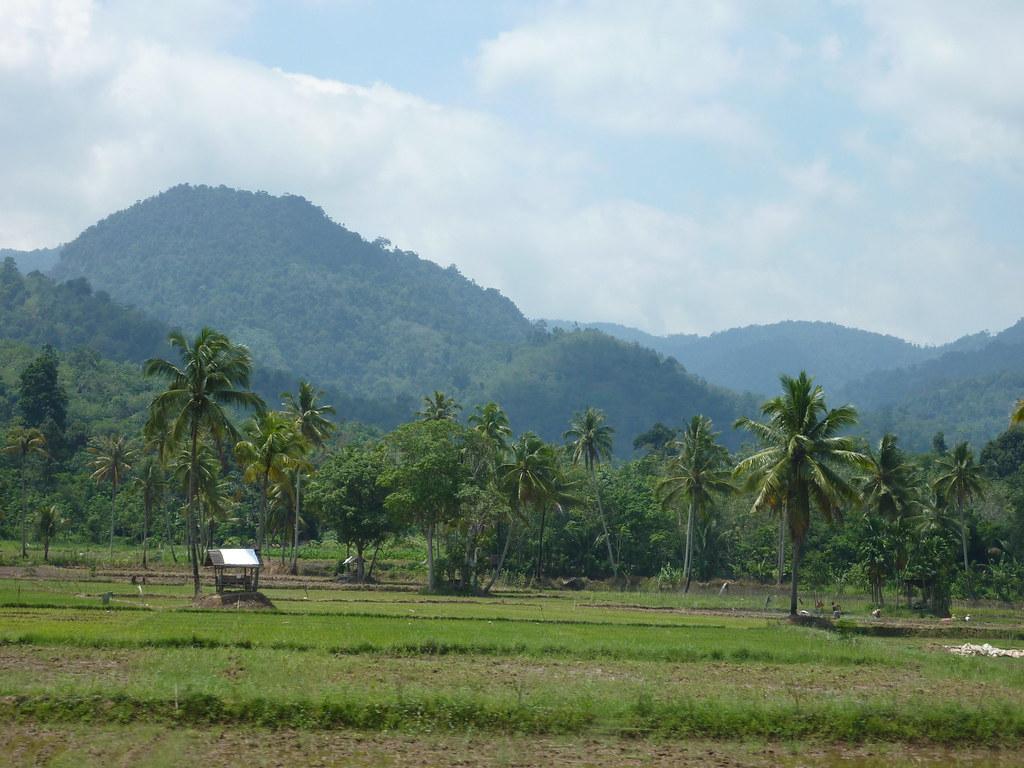 Sumatra-Bukittinggi (11)