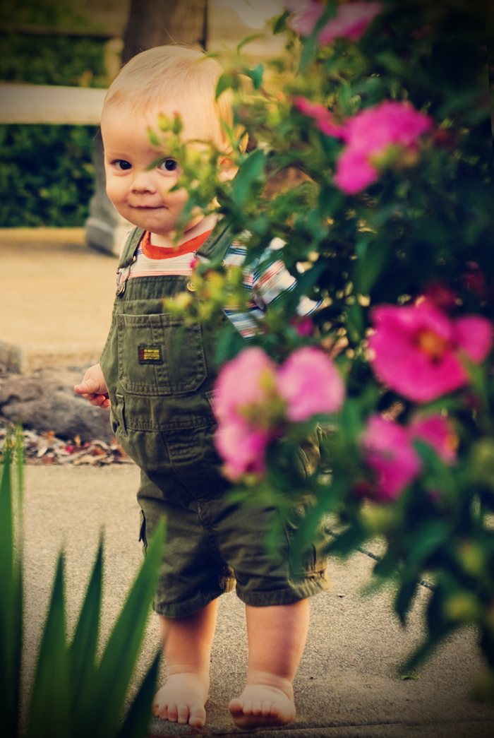 Johnathan in Flower Garden Butterscotch Vintage BLOG