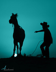 Little Cowboy 2 [ Explore ] (ANOODONNA) Tags: horse sun silhouette cowboy explore canonef2470mmf28lusm professionalphotographer littlecowboy canoneos50d anoodonna العنودالرشيد alanoodalrasheed inshaallahexplore