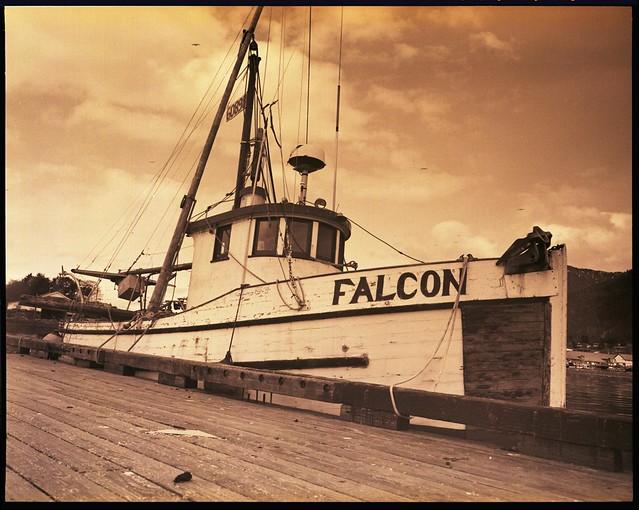 Sitka Falcon