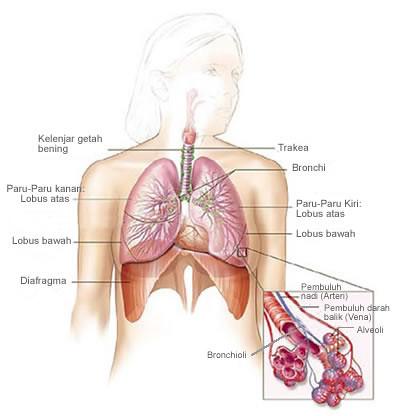 after gallbladder removal surgery ulcerative colitis