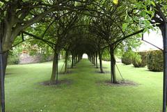 Pergola of Trees