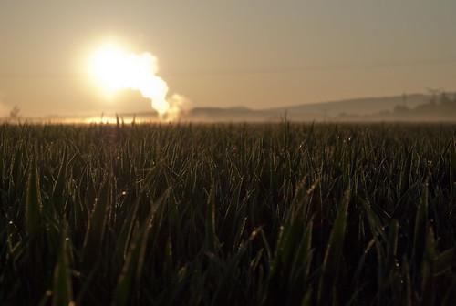 Morning sun #1
