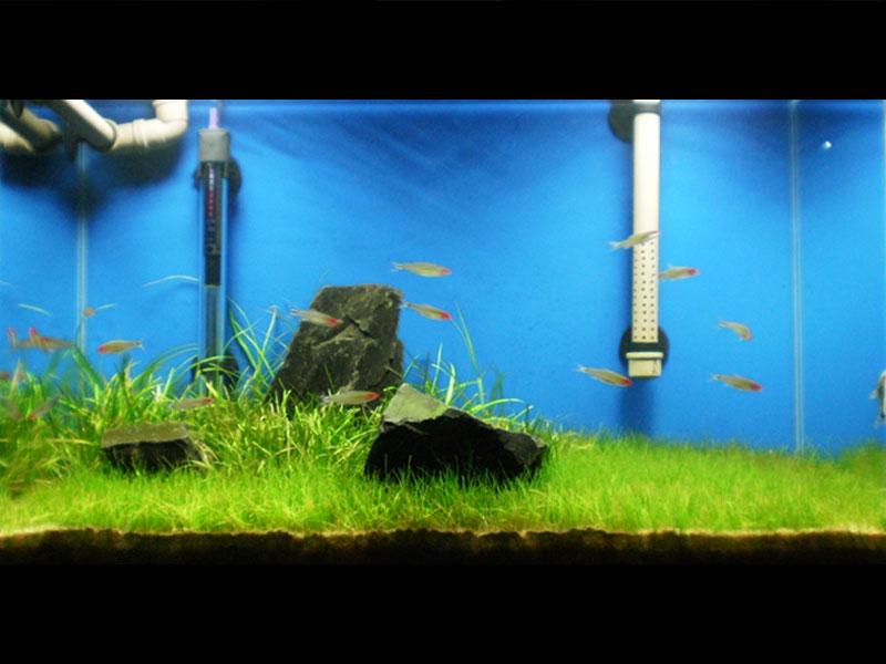 Meu aquário 4645693515_0c5df74feb_o