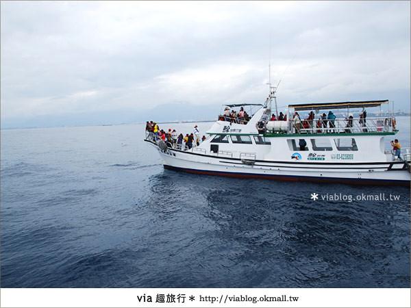 【花蓮賞鯨】花蓮玩樂趣~花蓮賞鯨之旅11