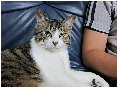 CANON IXY30Sのハイスピード動画で猫を撮ってみた