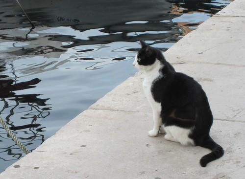 cat 2010 299