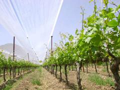 Llegan al mundo los «vinos de altura»