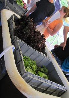 Lettuce Bath