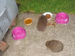 Our hedgehog friends