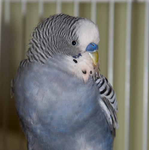 found parakeet SLC Utah