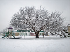 Tree & Day Care Center, Day after Snowstorm