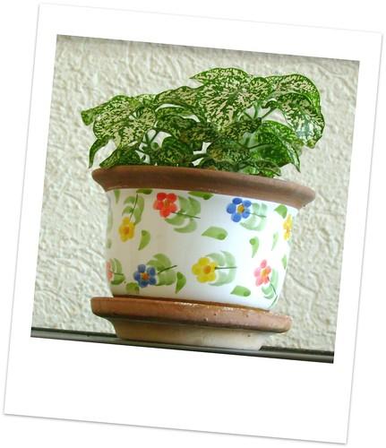 plantita2