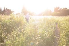 a man walking in to the sun (Roberto_Ventre) Tags: summer people italy sun man rome roma grass walking meadow oldman flare sole granfather flowersplants pinetasacchetti meadp parcoregionaleurbanodelpineto