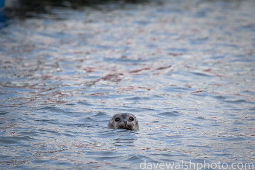 Seal, Svalbard