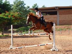 kremly forever s2 (Victria Guereschi) Tags: friends horse sun love sol jump amor grama malu natalia amigas gress cavalo marrom saltar